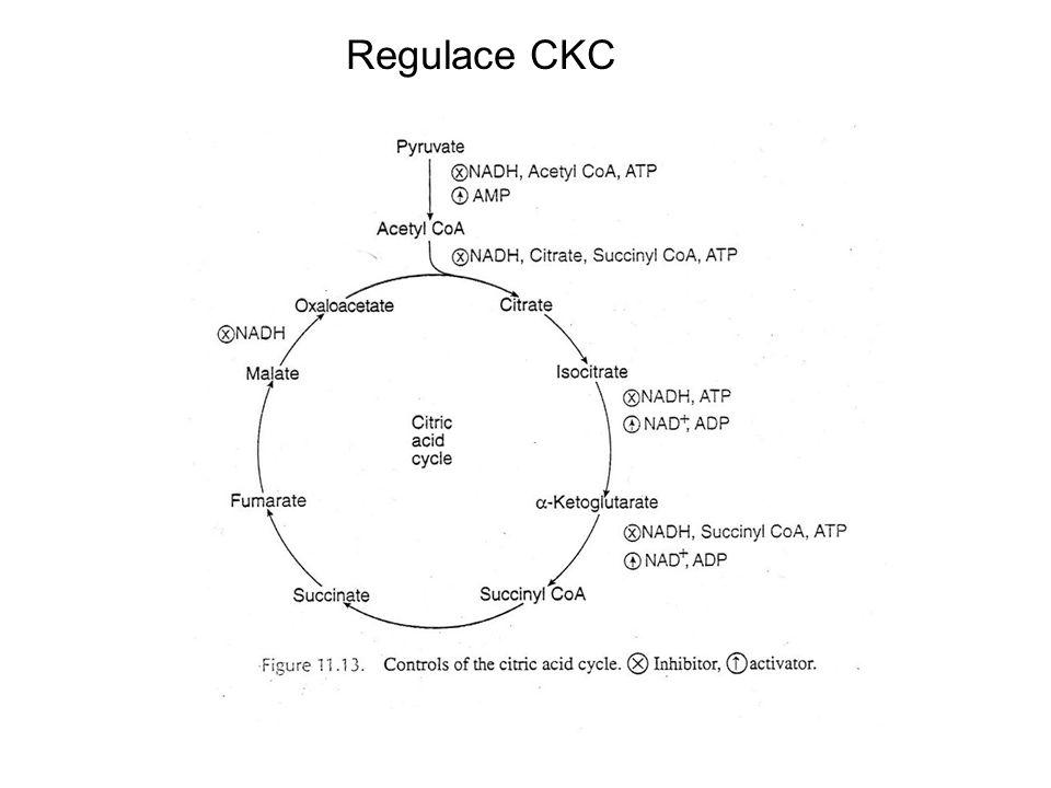 Regulace CKC