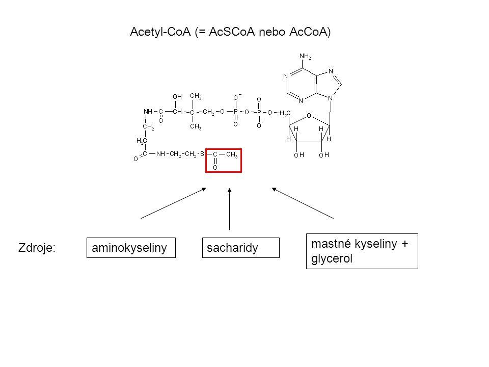 Acetyl-CoA (= AcSCoA nebo AcCoA) Zdroje: aminokyselinysacharidy mastné kyseliny + glycerol