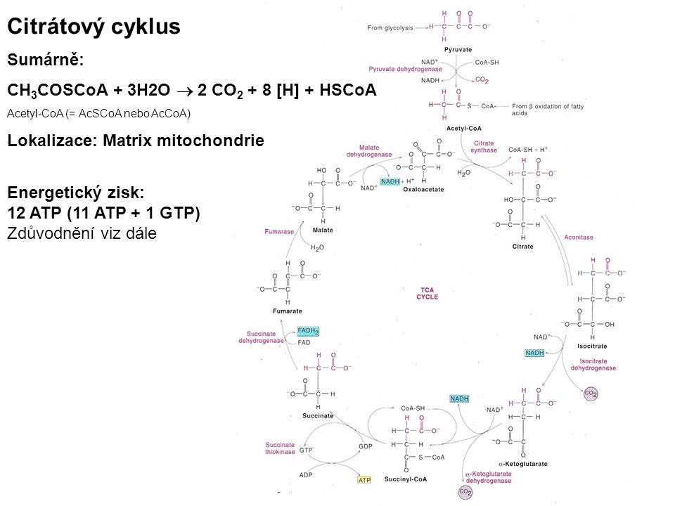 Citrátový cyklus Sumárně: CH 3 COSCoA + 3H2O  2 CO 2 + 8 [H] + HSCoA Acetyl-CoA (= AcSCoA nebo AcCoA) Lokalizace: Matrix mitochondrie Energetický zisk: 12 ATP (11 ATP + 1 GTP) Zdůvodnění viz dále