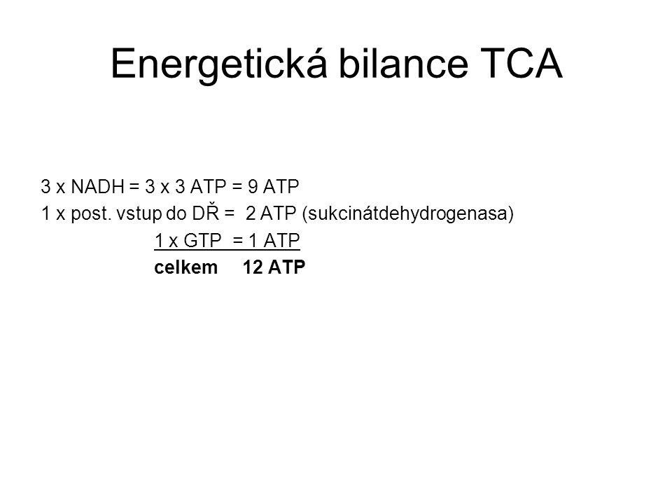 Energetická bilance TCA 3 x NADH = 3 x 3 ATP = 9 ATP 1 x post.