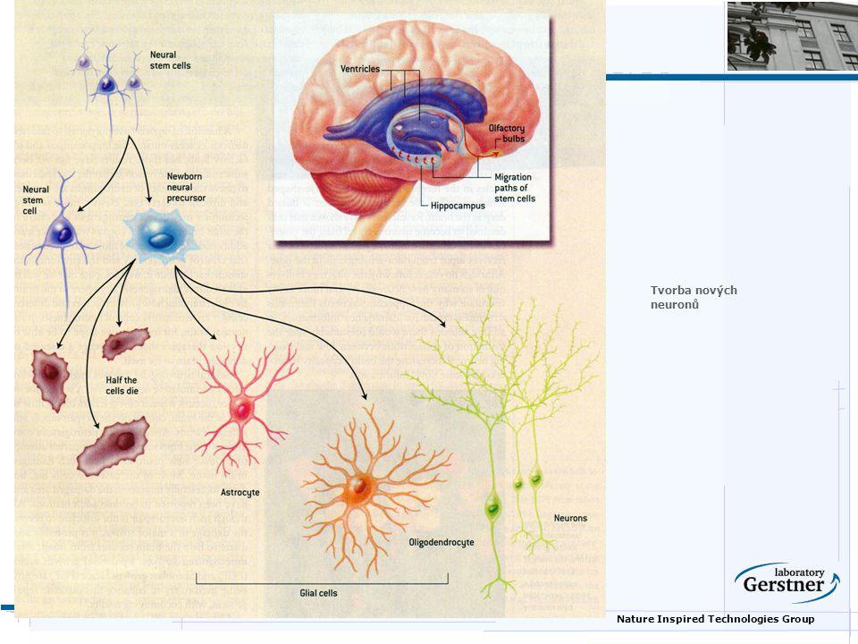 Nature Inspired Technologies Group Tvorba nových neuronů