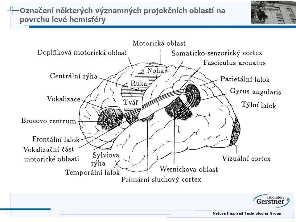 Nature Inspired Technologies Group Označení některých významných projekčních oblastí na povrchu levé hemisféry