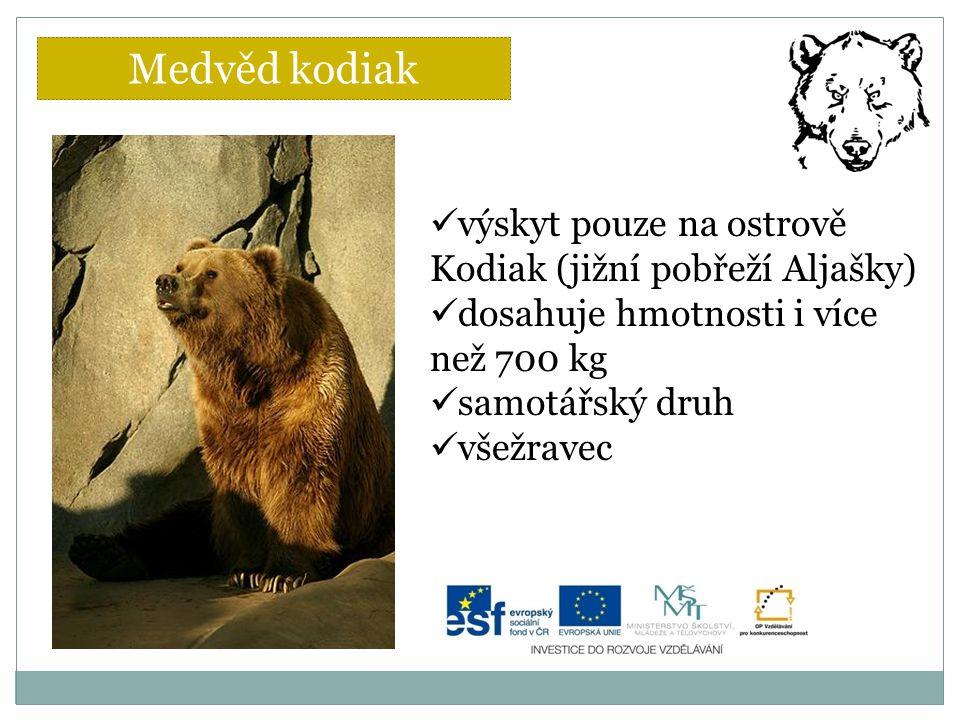 výskyt pouze na ostrově Kodiak (jižní pobřeží Aljašky) dosahuje hmotnosti i více než 700 kg samotářský druh všežravec