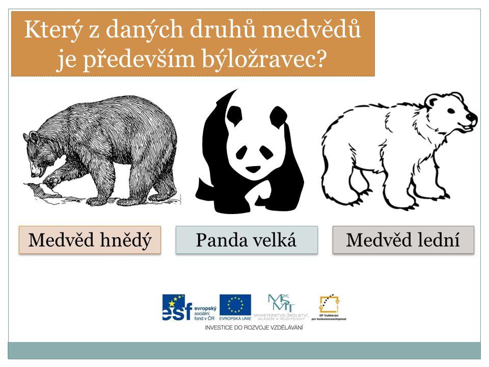 Který z daných druhů medvědů je především býložravec? Medvěd hnědý Panda velká Medvěd lední
