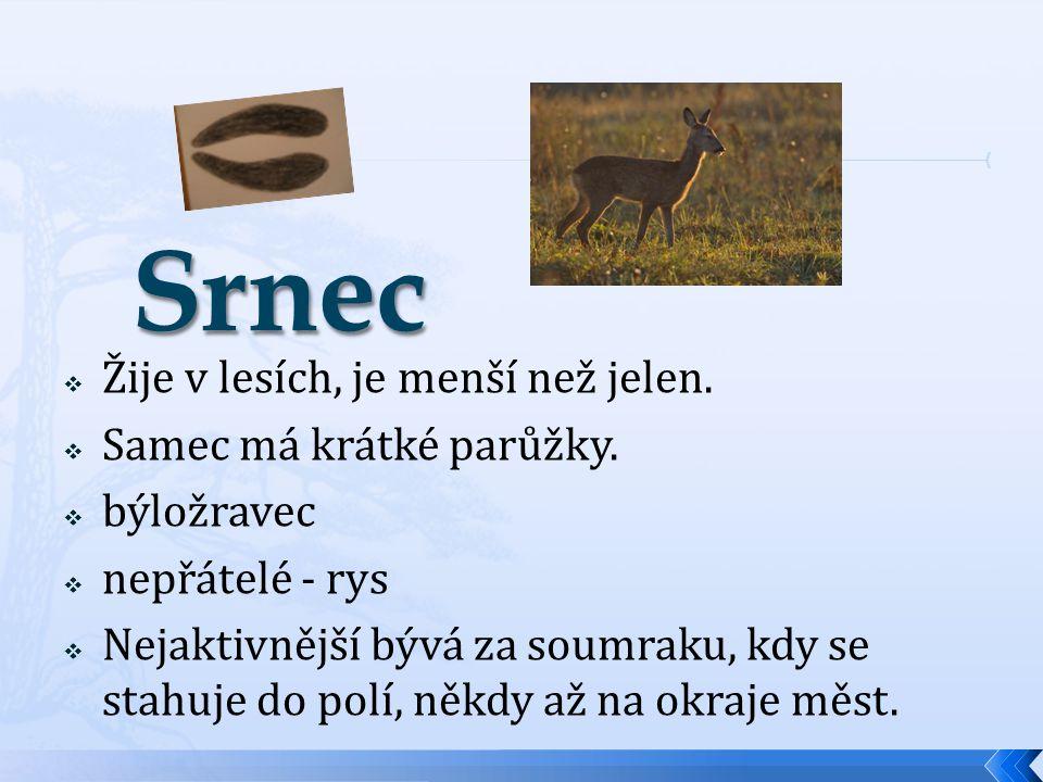  Žije v lesích, je menší než jelen.  Samec má krátké parůžky.