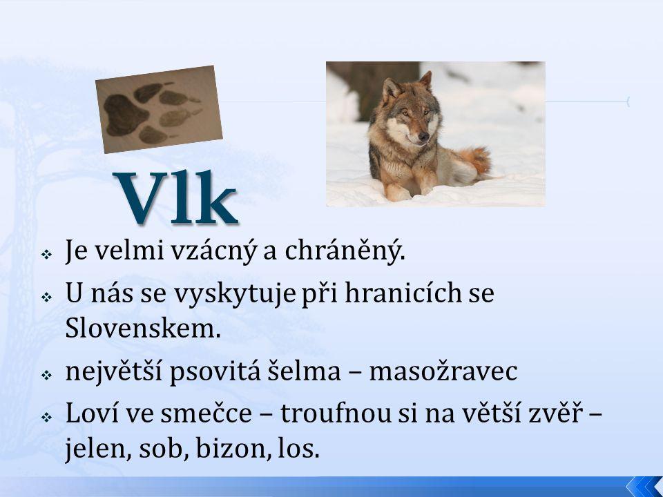  Je velmi vzácný a chráněný.  U nás se vyskytuje při hranicích se Slovenskem.