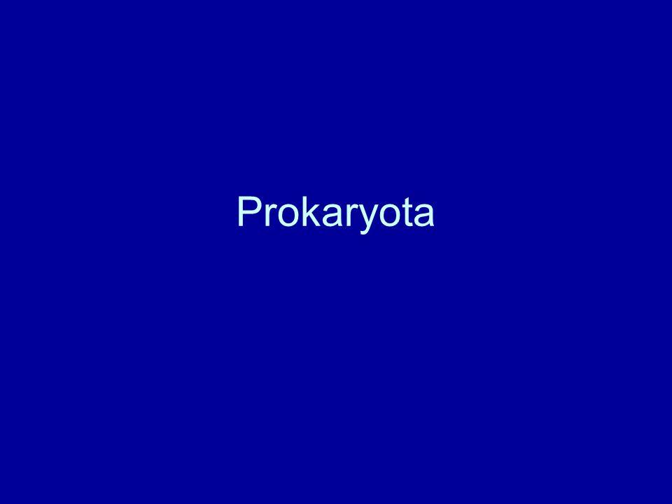 členění organismů prokaryota a eukaryota prokaryota jsou mnohem jednodušší –uspořádání DNA –organizace syntézy proteinů