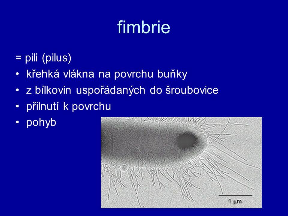 fimbrie = pili (pilus) křehká vlákna na povrchu buňky z bílkovin uspořádaných do šroubovice přilnutí k povrchu pohyb