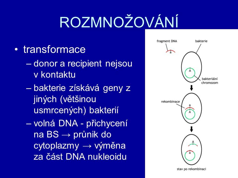 ROZMNOŽOVÁNÍ transformace –donor a recipient nejsou v kontaktu –bakterie získává geny z jiných (většinou usmrcených) bakterií –volná DNA - přichycení na BS → průnik do cytoplazmy → výměna za část DNA nukleoidu