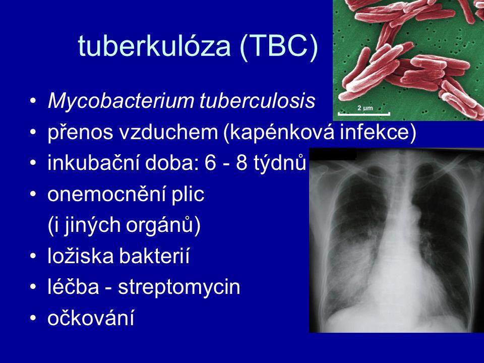 tuberkulóza (TBC) Mycobacterium tuberculosis přenos vzduchem (kapénková infekce) inkubační doba: 6 - 8 týdnů onemocnění plic (i jiných orgánů) ložiska