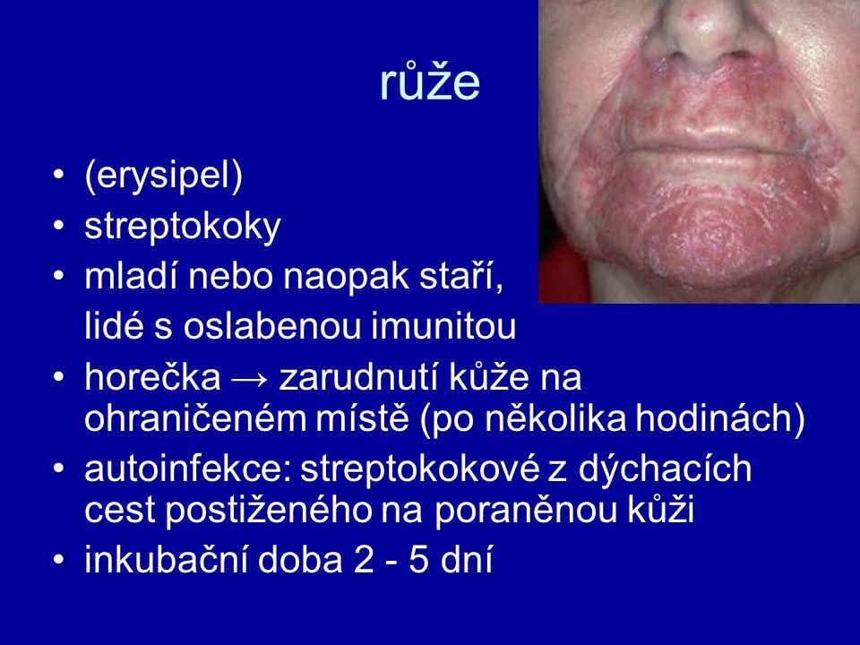 růže (erysipel) streptokoky mladí nebo naopak staří, lidé s oslabenou imunitou horečka → zarudnutí kůže na ohraničeném místě (po několika hodinách) au