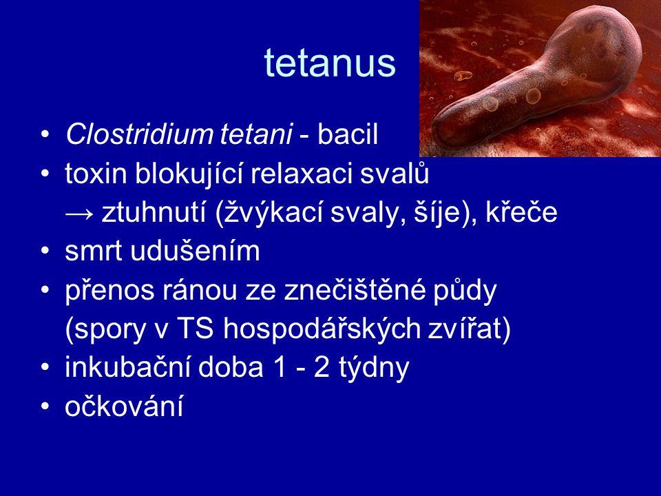 tetanus Clostridium tetani - bacil toxin blokující relaxaci svalů → ztuhnutí (žvýkací svaly, šíje), křeče smrt udušením přenos ránou ze znečištěné půd