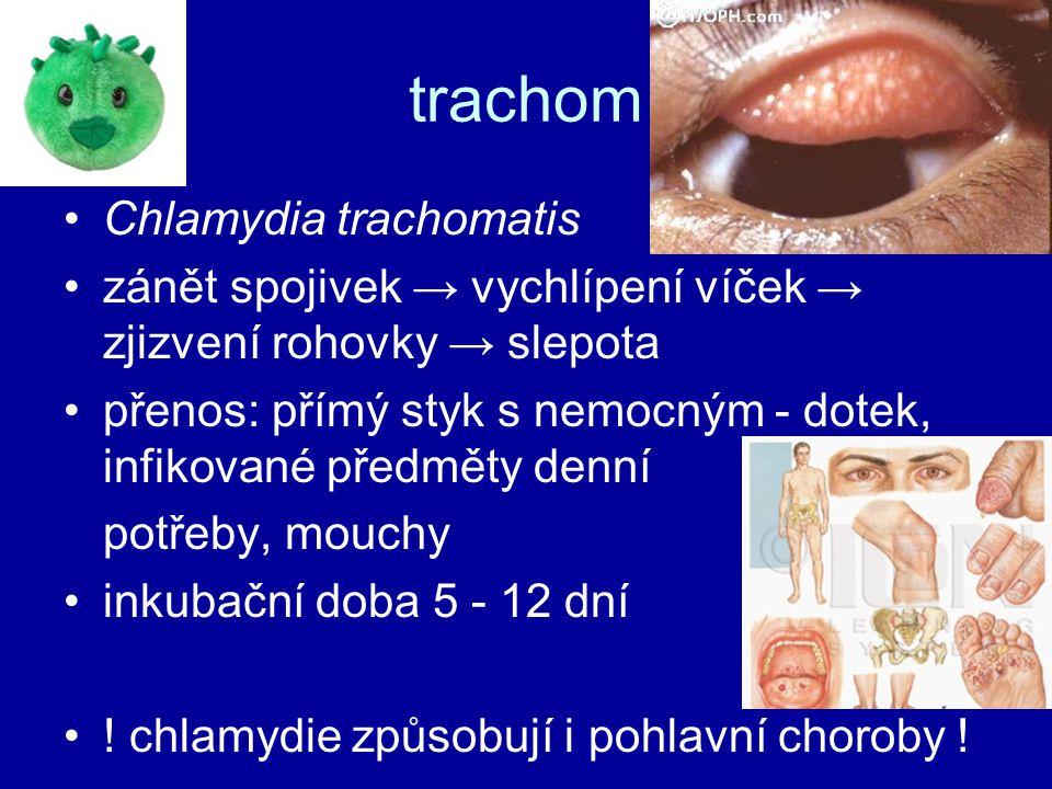 trachom Chlamydia trachomatis zánět spojivek → vychlípení víček → zjizvení rohovky → slepota přenos: přímý styk s nemocným - dotek, infikované předměty denní potřeby, mouchy inkubační doba 5 - 12 dní .