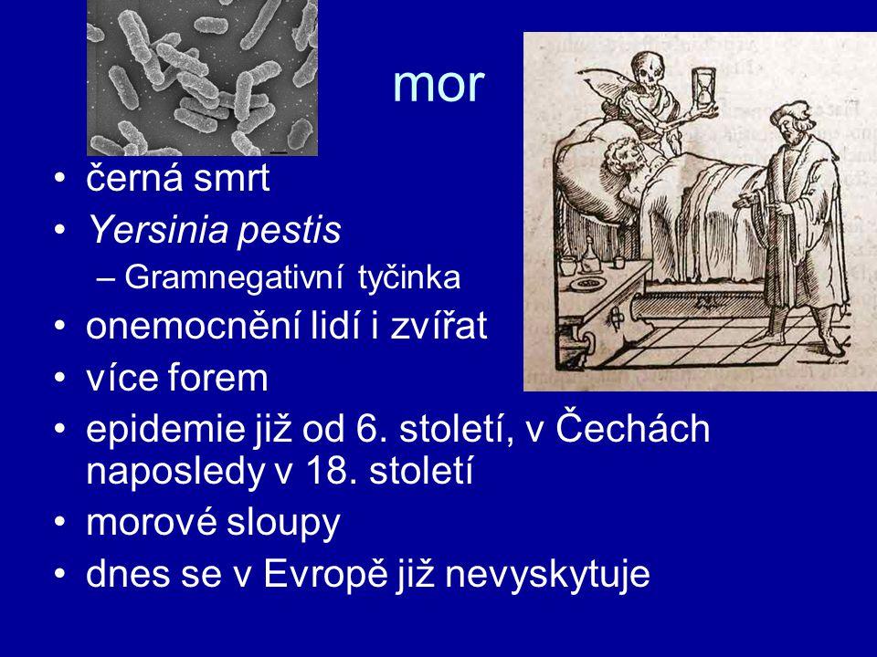 mor černá smrt Yersinia pestis –Gramnegativní tyčinka onemocnění lidí i zvířat více forem epidemie již od 6. století, v Čechách naposledy v 18. stolet