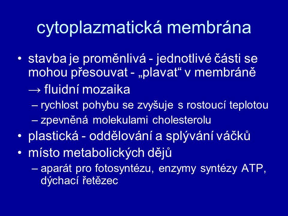 """cytoplazmatická membrána stavba je proměnlivá - jednotlivé části se mohou přesouvat - """"plavat"""" v membráně → fluidní mozaika –rychlost pohybu se zvyšuj"""