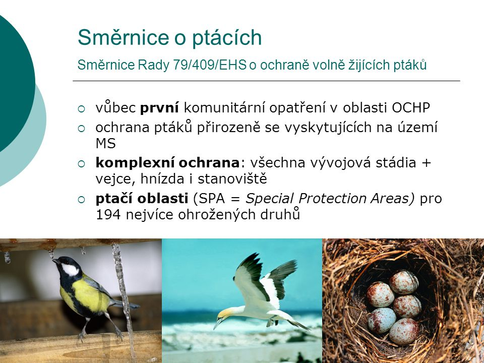 Směrnice o ptácích Směrnice Rady 79/409/EHS o ochraně volně žijících ptáků  vůbec první komunitární opatření v oblasti OCHP  ochrana ptáků přirozeně