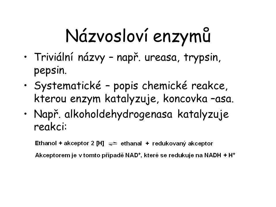 Názvosloví enzymů Triviální názvy – např. ureasa, trypsin, pepsin. Systematické – popis chemické reakce, kterou enzym katalyzuje, koncovka –asa. Např.