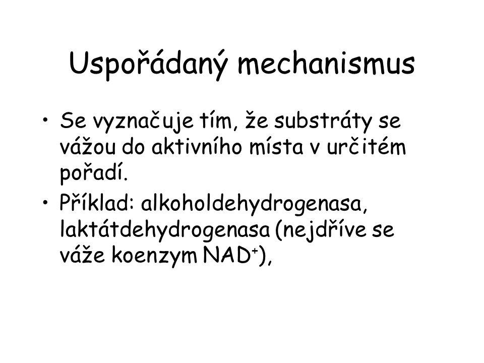 Uspořádaný mechanismus Se vyznačuje tím, že substráty se vážou do aktivního místa v určitém pořadí. Příklad: alkoholdehydrogenasa, laktátdehydrogenasa