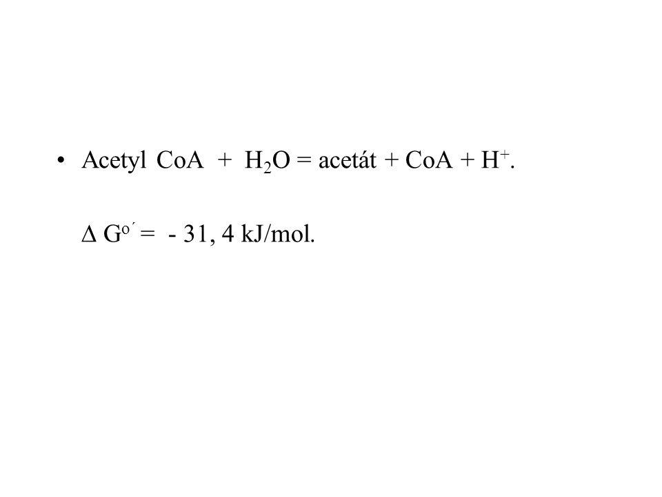 Acetyl CoA + H 2 O = acetát + CoA + H +.  G o´ = - 31, 4 kJ/mol.