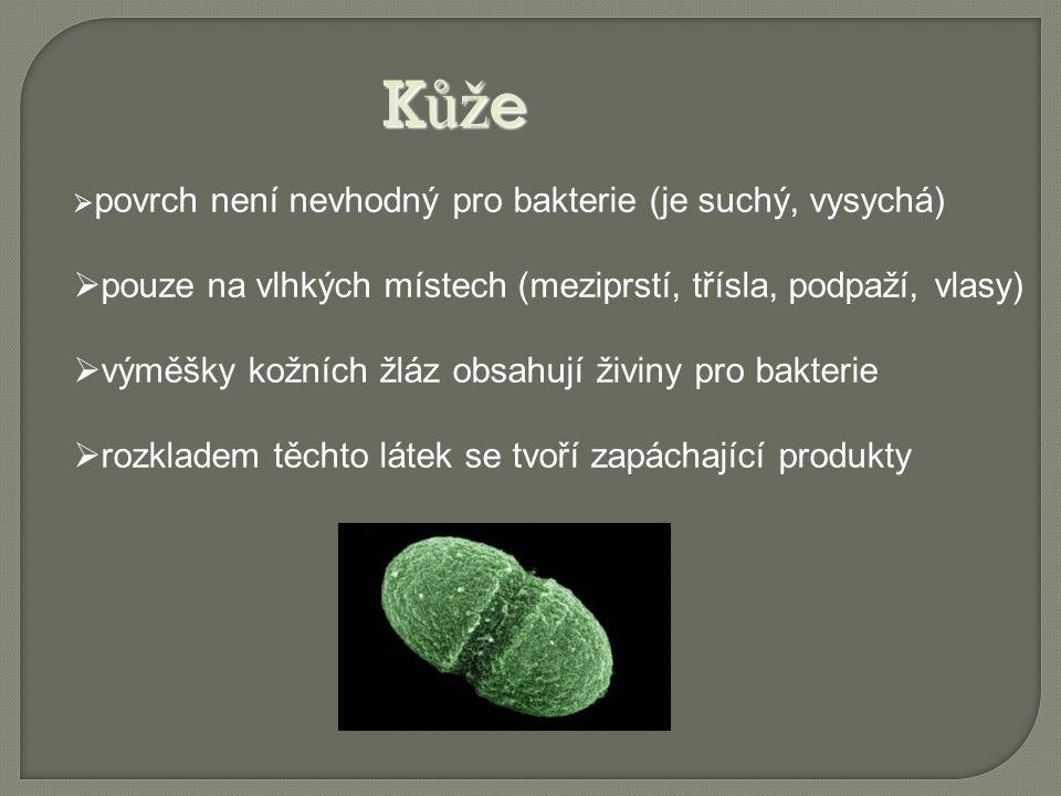  povrch není nevhodný pro bakterie (je suchý, vysychá)  pouze na vlhkých místech (meziprstí, třísla, podpaží, vlasy)  výměšky kožních žláz obsahují živiny pro bakterie  rozkladem těchto látek se tvoří zapáchající produkty K ůž e