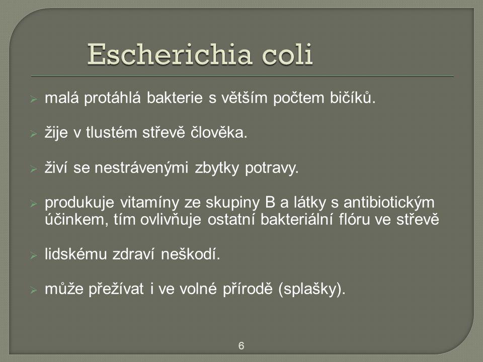  malá protáhlá bakterie s větším počtem bičíků.  žije v tlustém střevě člověka.