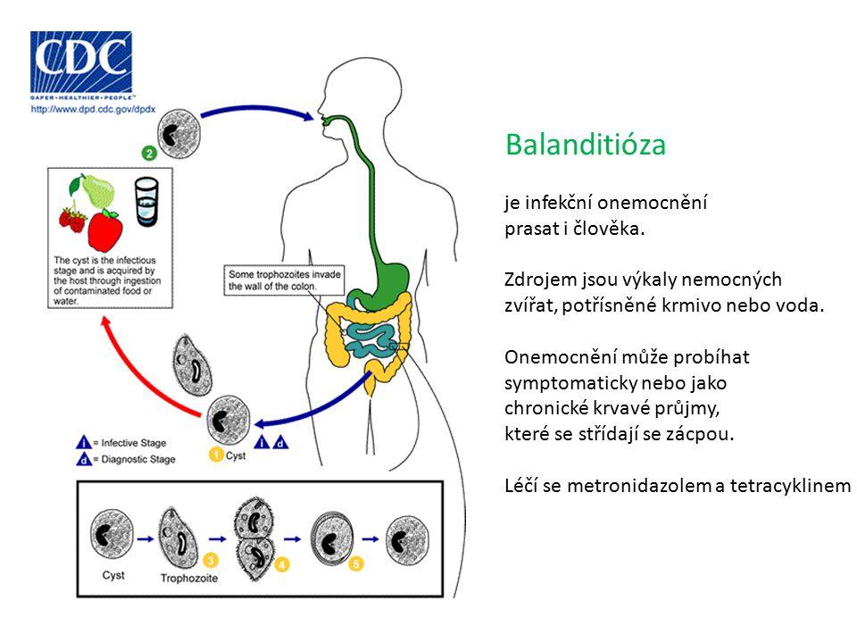 Balanditióza je infekční onemocnění prasat i člověka. Zdrojem jsou výkaly nemocných zvířat, potřísněné krmivo nebo voda. Onemocnění může probíhat symp