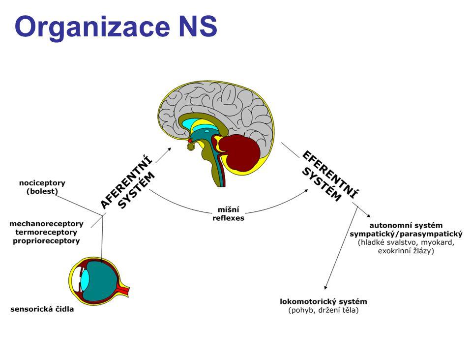 Organizace NS