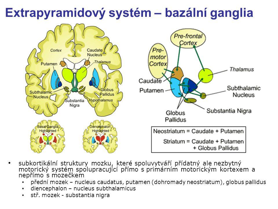 Extrapyramidový systém – bazální ganglia subkortikální struktury mozku, které spoluvytváří přídatný ale nezbytný motorický systém spolupracující přímo s primárním motorickým kortexem a nepřímo s mozečkem přední mozek – nucleus caudatus, putamen (dohromady neostriatum), globus pallidus diencephalon – nucleus subthalamicus stř.