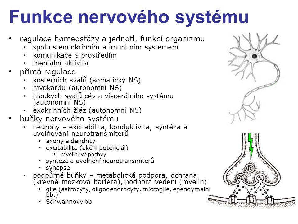 Funkce nervového systému regulace homeostázy a jednotl. funkcí organizmu spolu s endokrinním a imunitním systémem komunikace s prostředím mentální akt