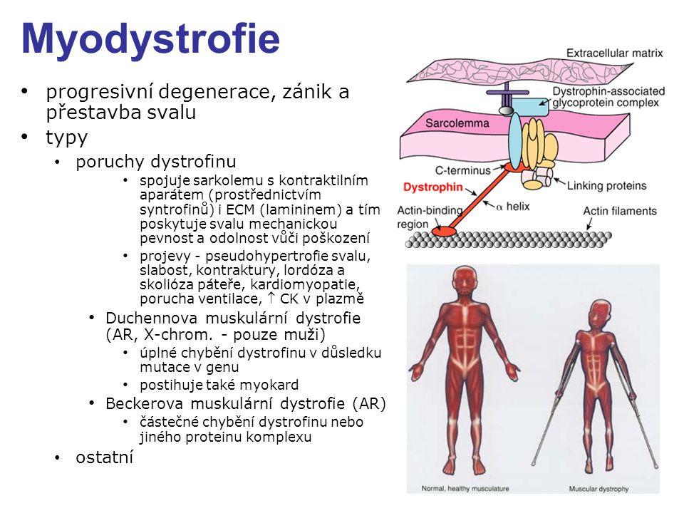 Myodystrofie progresivní degenerace, zánik a přestavba svalu typy poruchy dystrofinu spojuje sarkolemu s kontraktilním aparátem (prostřednictvím syntrofinů) i ECM (lamininem) a tím poskytuje svalu mechanickou pevnost a odolnost vůči poškození projevy - pseudohypertrofie svalu, slabost, kontraktury, lordóza a skolióza páteře, kardiomyopatie, porucha ventilace,  CK v plazmě Duchennova muskulární dystrofie (AR, X-chrom.