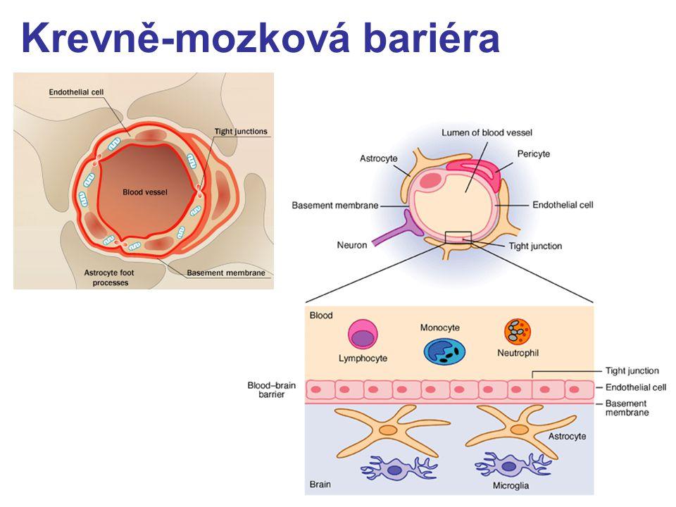 Krevně-mozková bariéra