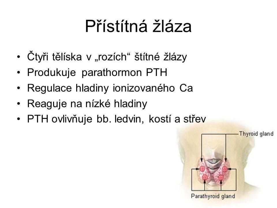 """Přístítná žláza Čtyři tělíska v """"rozích"""" štítné žlázy Produkuje parathormon PTH Regulace hladiny ionizovaného Ca Reaguje na nízké hladiny PTH ovlivňuj"""