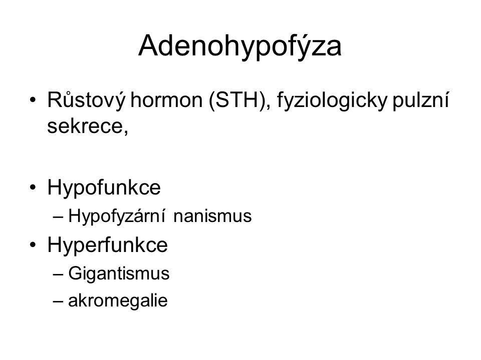 Adenohypofýza Růstový hormon (STH), fyziologicky pulzní sekrece, Hypofunkce –Hypofyzární nanismus Hyperfunkce –Gigantismus –akromegalie