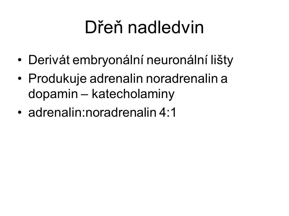 Dřeň nadledvin Derivát embryonální neuronální lišty Produkuje adrenalin noradrenalin a dopamin – katecholaminy adrenalin:noradrenalin 4:1