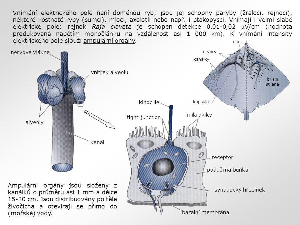 Vnímání elektrického pole není doménou ryb; jsou jej schopny paryby (žraloci, rejnoci), některé kostnaté ryby (sumci), mloci, axolotli nebo např. i pt