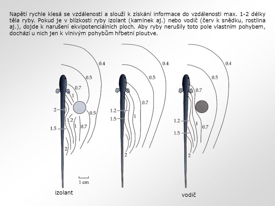 Napětí rychle klesá se vzdáleností a slouží k získání informace do vzdálenosti max. 1-2 délky těla ryby. Pokud je v blízkosti ryby izolant (kamínek aj