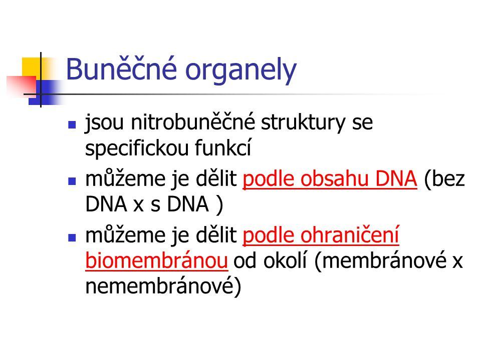 Buněčné organely jsou nitrobuněčné struktury se specifickou funkcí můžeme je dělit podle obsahu DNA (bez DNA x s DNA ) můžeme je dělit podle ohraničení biomembránou od okolí (membránové x nemembránové)