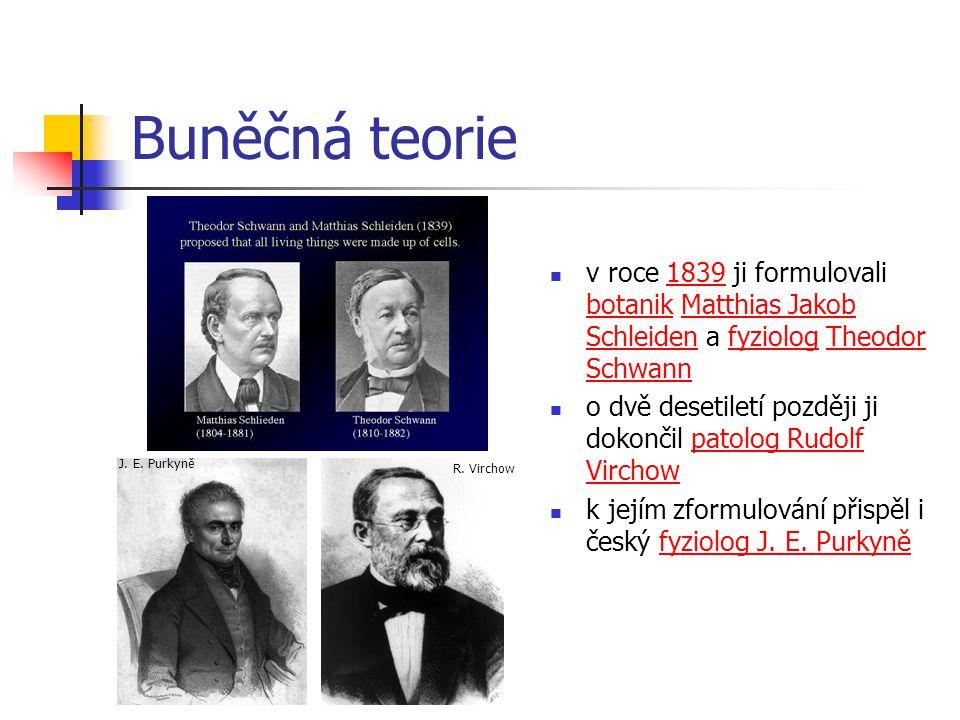 Buněčná teorie v roce 1839 ji formulovali botanik Matthias Jakob Schleiden a fyziolog Theodor Schwann183 botanikMatthias Jakob SchleidenfyziologTheodor o dvě desetiletí později ji dokončil patolog Rudolf Virchow k jejím zformulování přispěl i český fyziolog J.