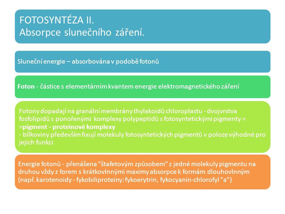 Sluneční energie – absorbována v podobě fotonů Foton - částice s elementárním kvantem energie elektromagnetického záření Fotony dopadají na granální membrány thylakoidů chloroplastu - dvojvrstva fosfolipidů s ponořenými komplexy polypeptidů s fotosyntetickými pigmenty = =pigment - proteinové komplexy - bílkoviny především fixují molekuly fotosyntetických pigmentů v poloze výhodné pro jejich funkci Energie fotonů - přenášena štafetovým způsobem z jedné molekuly pigmentu na druhou vždy z forem s krátkovlnnými maximy absorpce k formám dlouhovlnným (např.