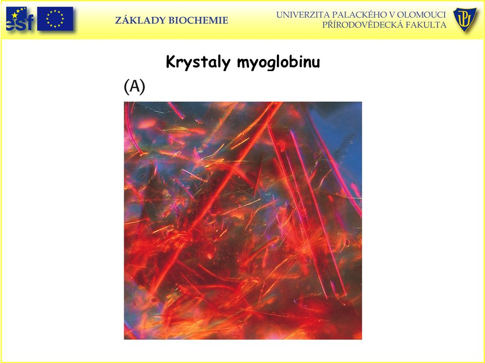 Krystaly myoglobinu