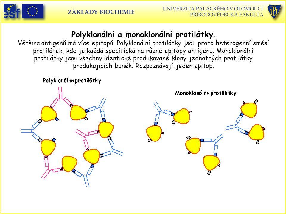 Polyklonální a monoklonální protilátky.Většina antigenů má více epitopů.