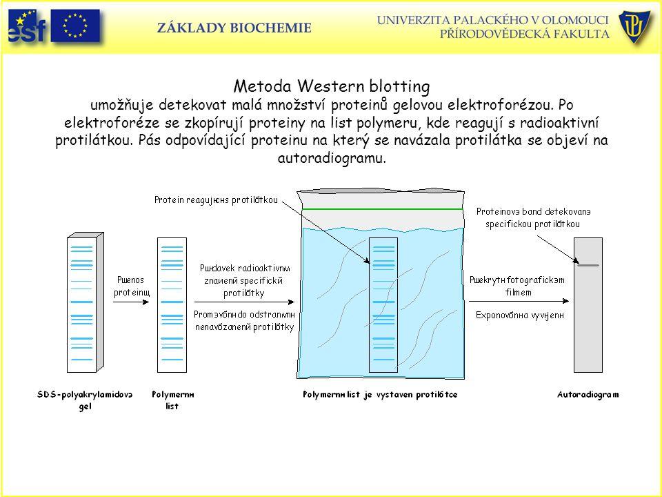 Metoda Western blotting umožňuje detekovat malá množství proteinů gelovou elektroforézou.