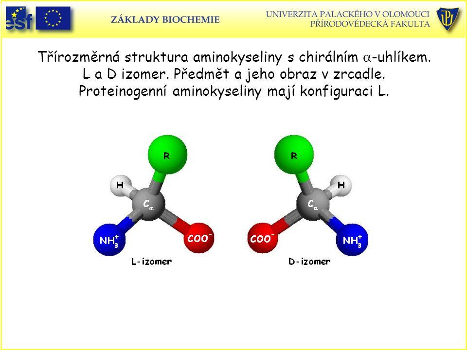 Třírozměrná struktura aminokyseliny s chirálním  -uhlíkem.