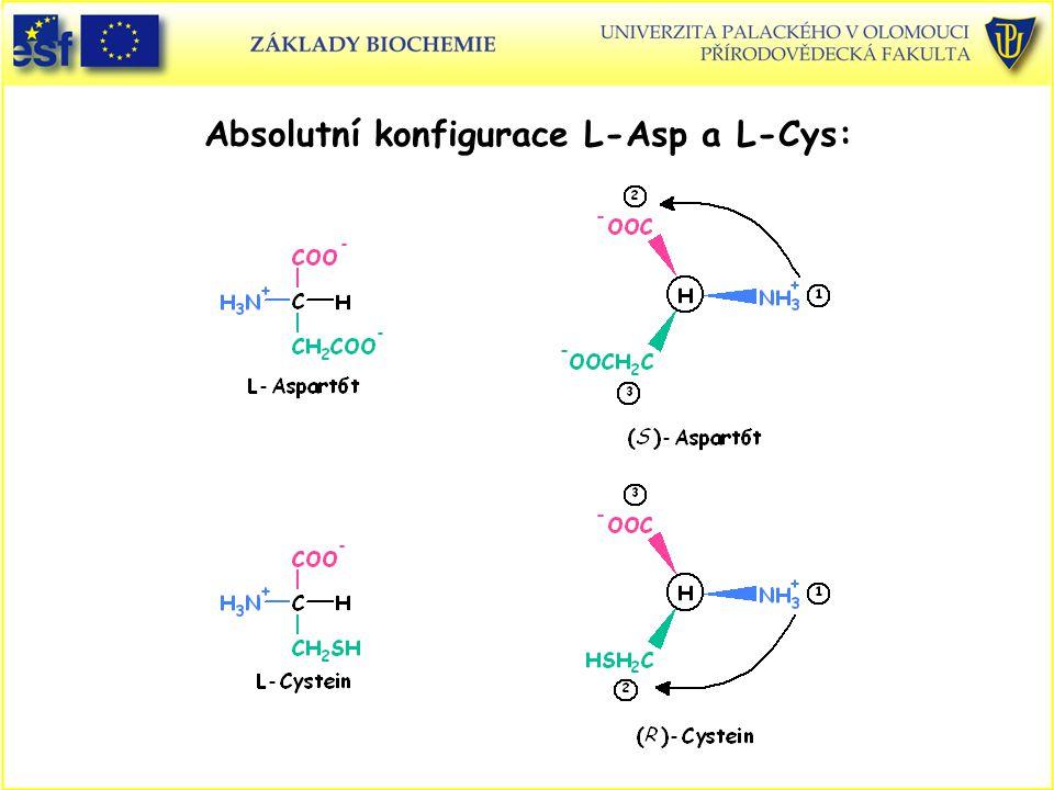 Absolutní konfigurace L-Asp a L-Cys: