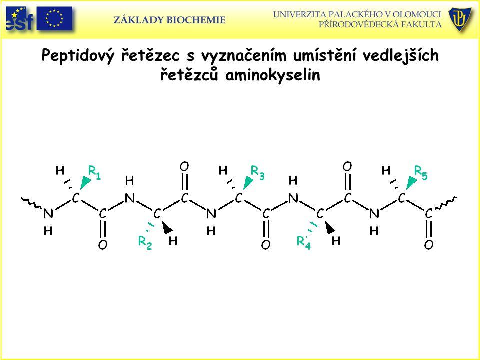Peptidový řetězec s vyznačením umístění vedlejších řetězců aminokyselin