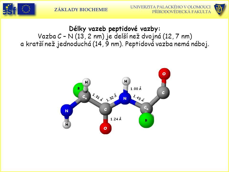 Délky vazeb peptidové vazby: Vazba C – N (13, 2 nm) je delší než dvojná (12, 7 nm) a kratší než jednoduchá (14, 9 nm).
