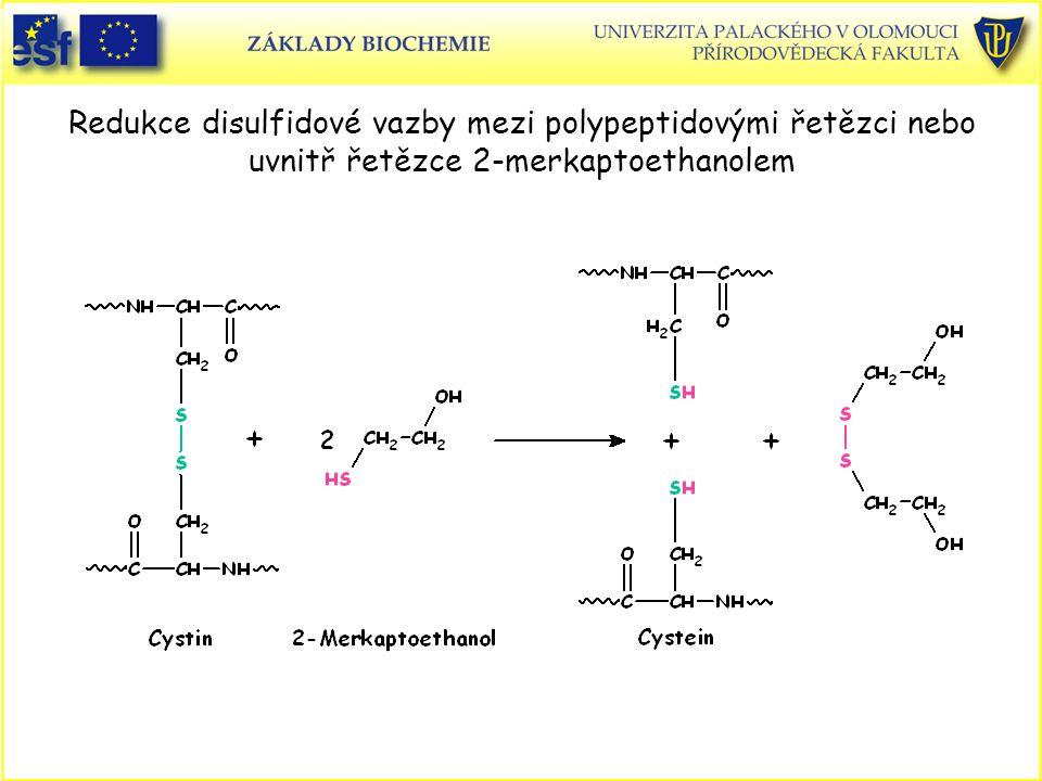 Redukce disulfidové vazby mezi polypeptidovými řetězci nebo uvnitř řetězce 2-merkaptoethanolem