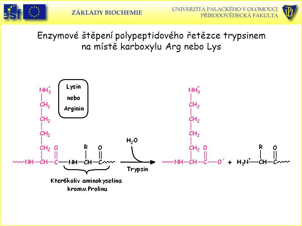 Enzymové štěpení polypeptidového řetězce trypsinem na místě karboxylu Arg nebo Lys