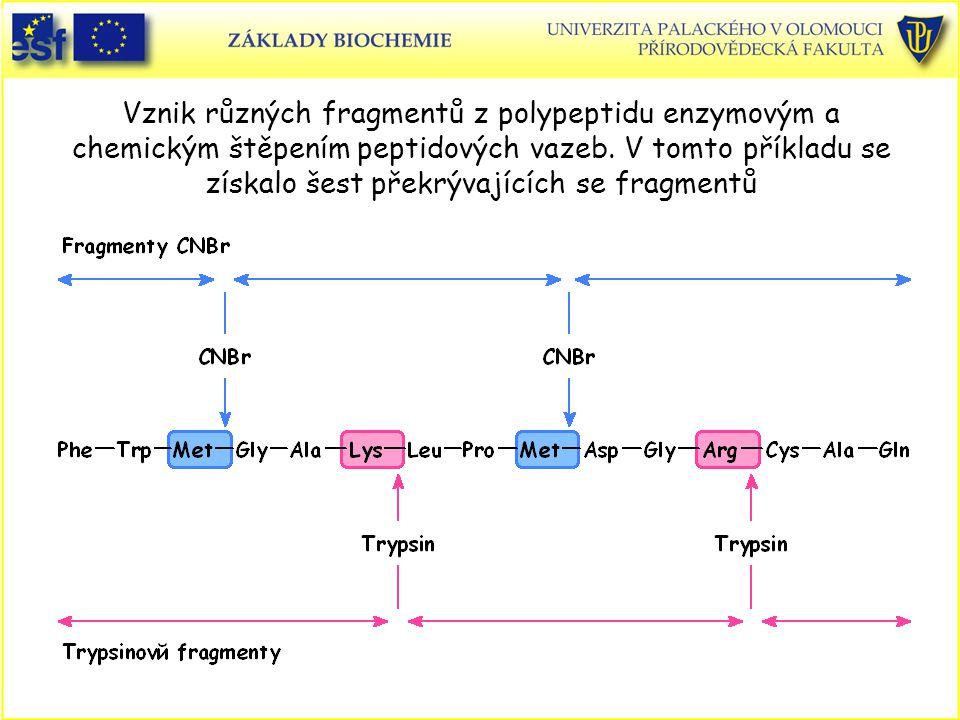 Vznik různých fragmentů z polypeptidu enzymovým a chemickým štěpením peptidových vazeb.