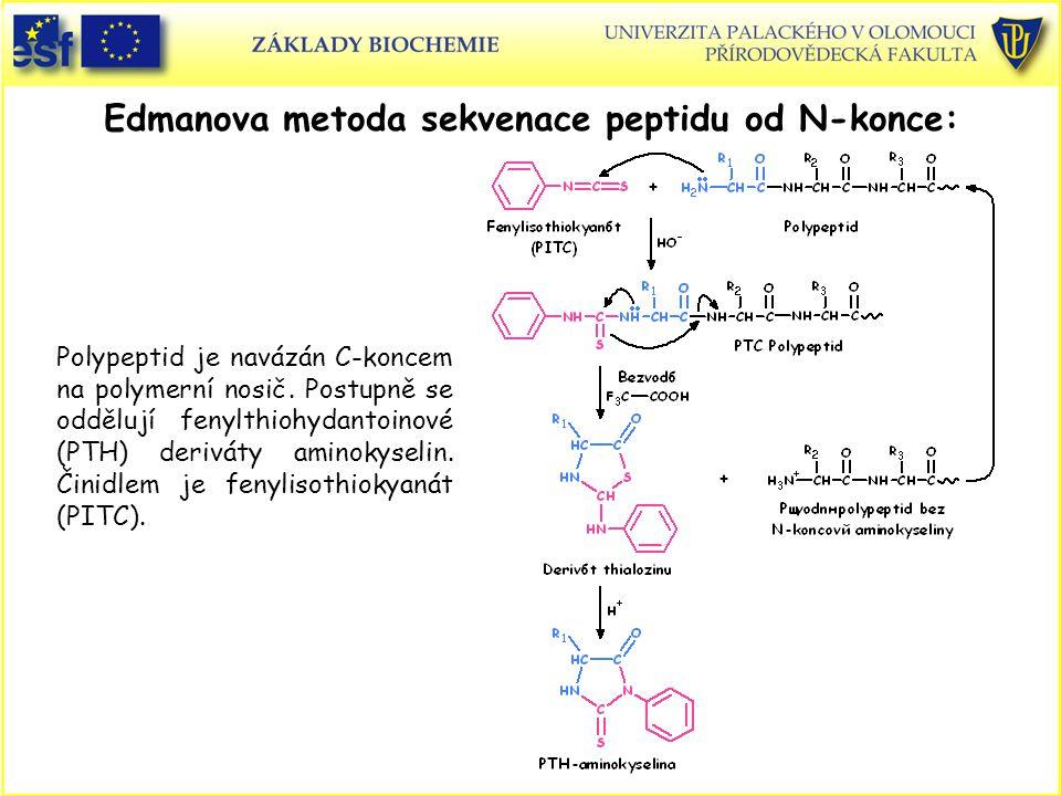 Edmanova metoda sekvenace peptidu od N-konce: Polypeptid je navázán C-koncem na polymerní nosič.